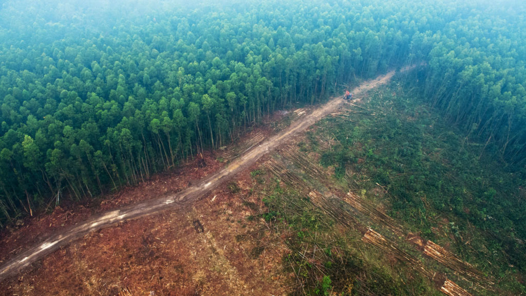 Air view image of a forest with cut down trees