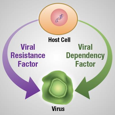 Virus depiction in a host